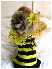 Patterns: bumble bee dog sweater crochet