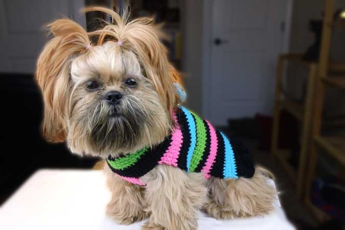 Crochet Dog Sweater Pattern Instructions